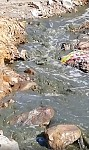 Alarm Signal: Wastewater from Agarak Copper and Molybdenum Combine Flowing to Kartchevan River