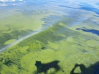 Lake Sevan Again Bloomed: Scientists Developing New Tool To Fight Against Algae