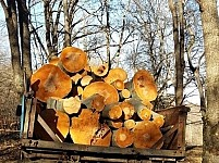Illegal Tree Felling in Lori Region
