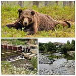 Whether SHPPs Are Reason for Frequent Attacks of Bears on Communities Located on Banks of Yeghegis River?