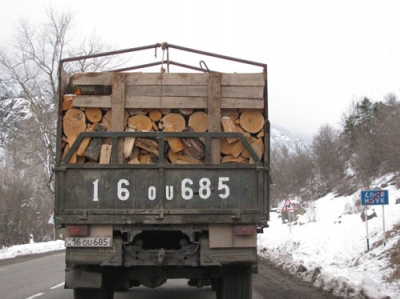 Illegal Tree Felling in Dilijan Forest