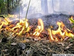 From Now on Burning Vegetation Banned by Law