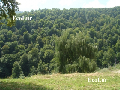 Soil at Expense of Tavush Forests