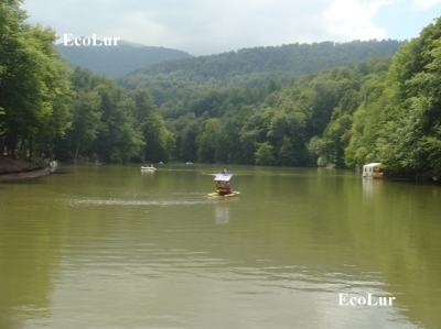 Natural Growth of Trees Decreased in Dilijan National Park for 2012
