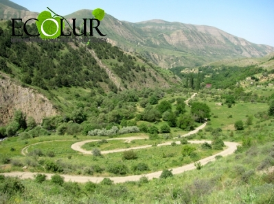 Candidate Programs for Khosrov Reserve Director Position