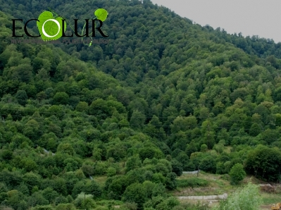 The Independent Public Monitoring of Forests in Armenia' Project Launched