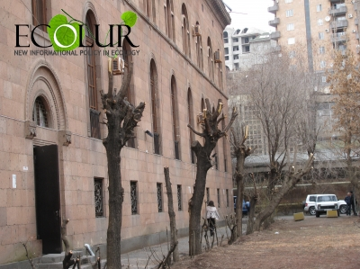 Tree Pruning To Be Launched in Yerevan from 1 November