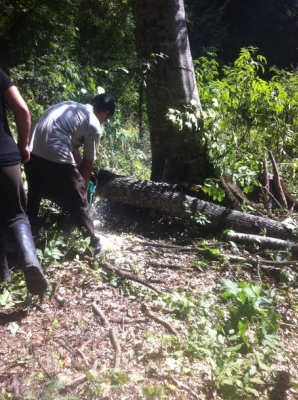 "Forests of ""Dilijan"" National Park Felled: Nature Protection Ministry Counting Damage"