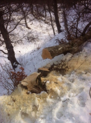 Illegal Tree Felling Continues in Dilijan National Park (Photo)