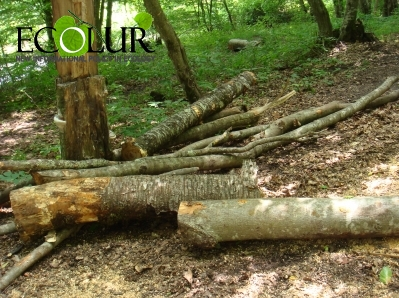 Criminal Case Initiated Based on Illegal Forest Felling Held in Paghjur River Valley