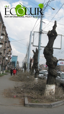 Spring Pruning To Be Launched in Yerevan from 1 March