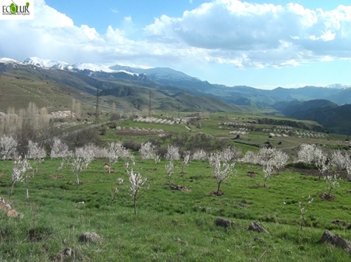 Jermuk Aldermen's Council Changed Category of 5 Agriculture Land Areas into Soil Management