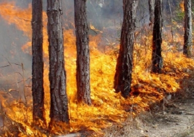 Fire in Dilijan National Park