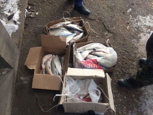 30 Items of Whitefish Confiscated Within One Week