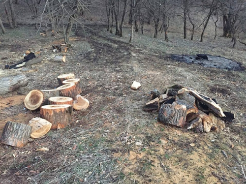 Illegal Cases of Cutting Trees Blown Down with Wind Recorded in Dilijan National Park