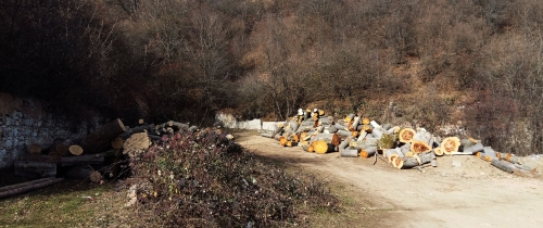 Damage of 57 Million AMD Caused to Dilijan National Park Because of Illegal Tree Felling