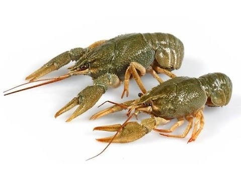 Hunting Crawfish Temporarily Banned in Water Bodies in Armenia