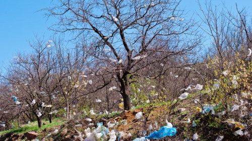 Demand to Armenian Government; Ban Plastic Bags in Shops