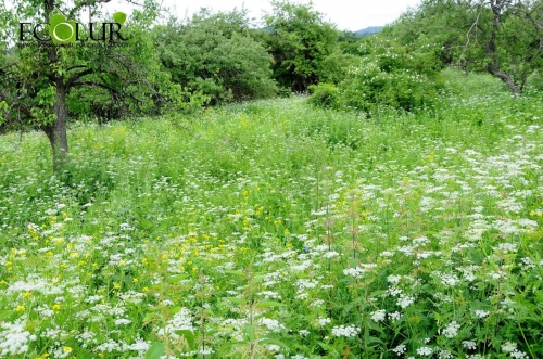 Unified Model for Forest Management in Armenia in Development Progress