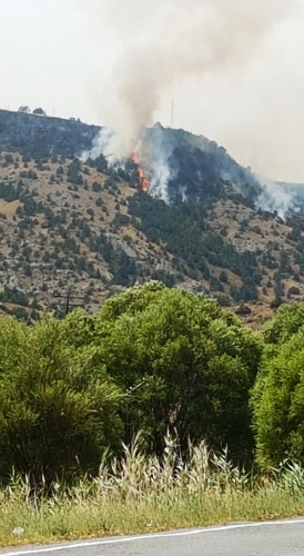 Juniper Forests in Artavan on Fire: Emergency in Vayots Dzor
