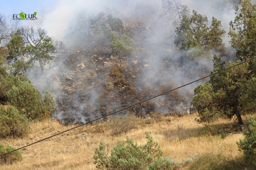Fire  Broken Out of Enemy's Quick Squirt in Arevik National Park Extinguished