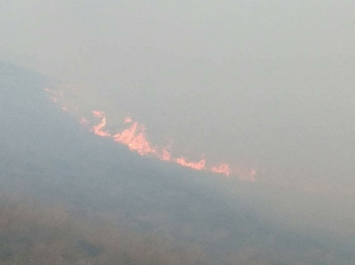 100 Sq. M. Area of New Fire Spot in Khoustoup Reserve Extinguished