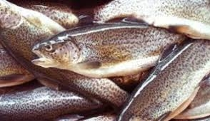 Criminal Case Initiated for Stealing 533 Items of Brown Trout Poaching from Khosrov Reserve