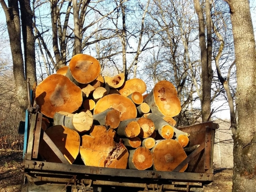 Illegal Felling of Pine Trees in Dilijan National Park: Truck Loaded with Timber Escaped