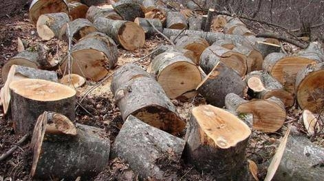 263  Illegally Cut Down Trees in Dilijan National Park