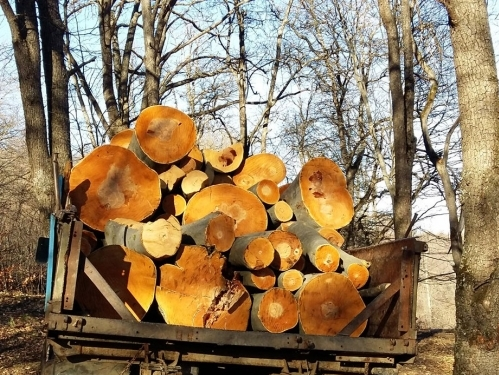 New Episodes of Bribery by Officials Detected in Criminal Case on Illegal Forest Felling