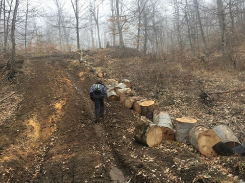 Nature Protection Ministry Clarifying Alarm Signal on Tree Felling in Dilijan National Park