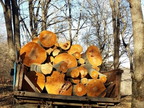 Forestry Enterprise Director Abused Office and Made Official Commit Fraud to Conceal Illegal Tree Felling Facts: Preliminary Investigation of Criminal Case is Over