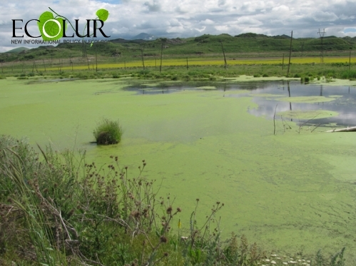 Scientist: Algae in Lake Sevan Are Toxic and Can Impact All Food Chains