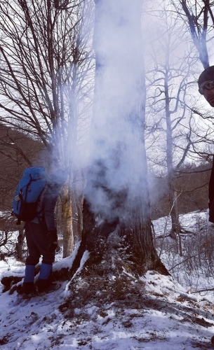 Tree with Burning Hollow Detected in Dilijan National Park