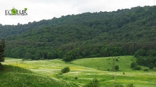 Armenian Government Intends to Perform Reforestation and Afforestation in 3658 Ha of Area in 2019-2022