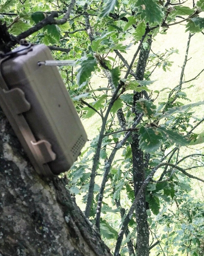 10 Sensor Control Devices Installed in Stepanavan Forestry Enterprise Area