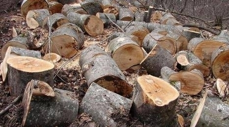 74 Trees Illegally Felled in Artsvaberd Forestry Area Causing About 6 Million AMD Damage to State
