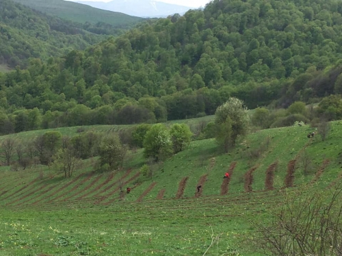 Orchards To Be Established in Tavush, Lori and Ararat