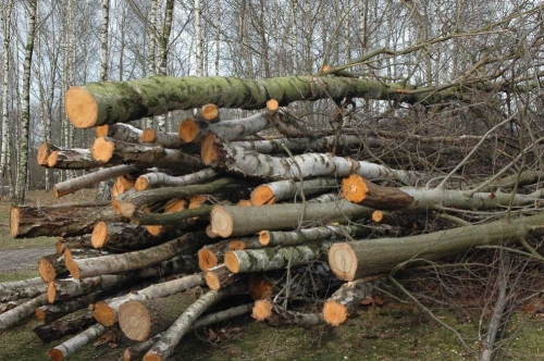 Over 2 Million AMD Damage Because of Illegal Tree Felling