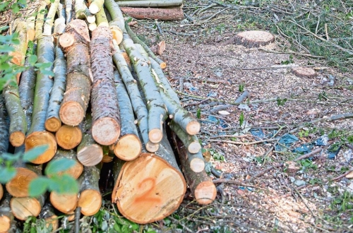 Over 53 Million AMD Damage Because of Illegal Tree Felling