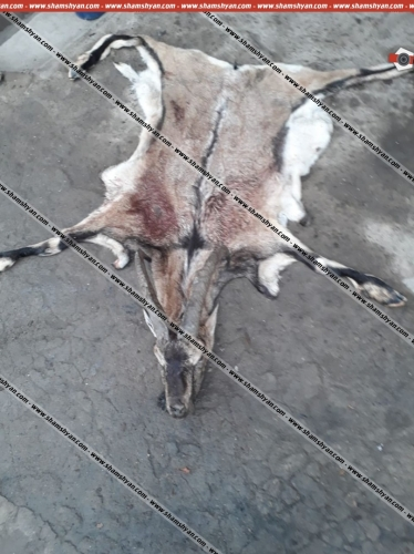 Police Officer Killed Red-Listed Bezoar Goat