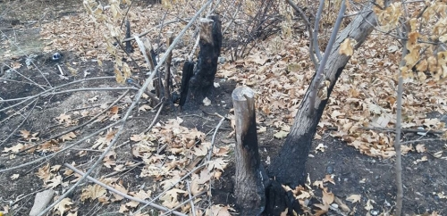 Alarm Signal; Trees Burnt Down and Felled in Victory Park
