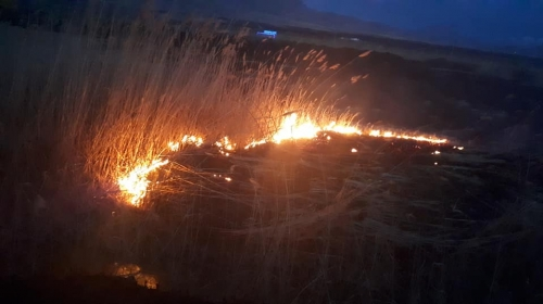 Fire Burned Down Trees in Newly Established Ecological Zone in Armash