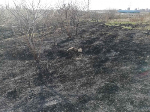 Unknown People Burnt Down Orchards Located in Dalma Gardens: Elimination Continuing