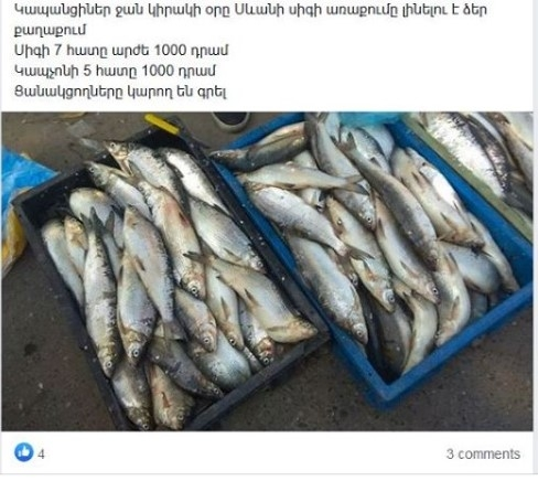Armenian Government Set Maximum Amount of Whitefish Fishing in Amount of 200 Tons: How Much Whitefish Caught From Beginning of Year?