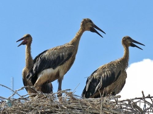Contaminated Stork Feathers and Samples from Land Water Sent for Lab Tests