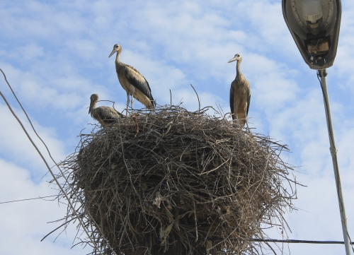 Inspection In Utilities Companies By Traces of Contaminated Storks